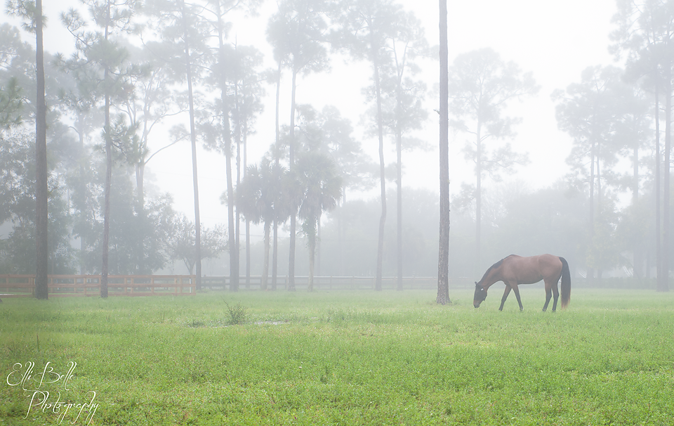 horse-in-fog