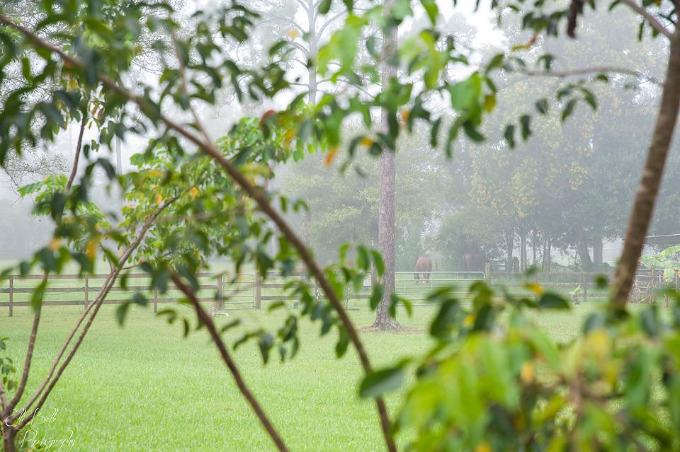 horses-beyond-trees