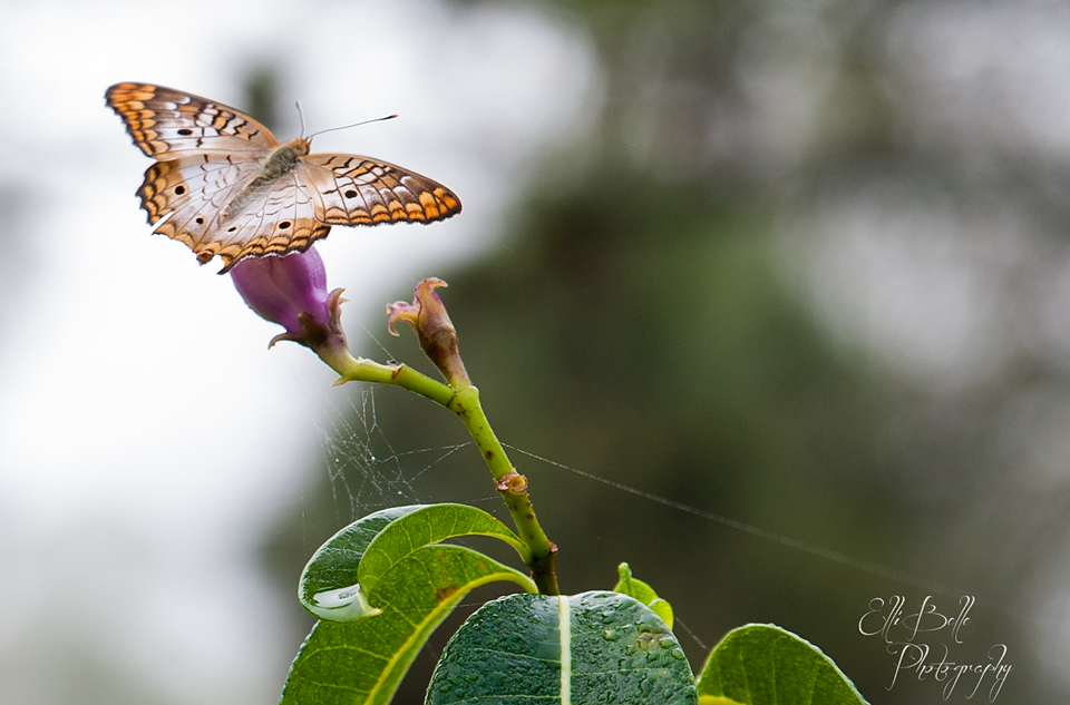 purple-flower-spiderweb-moth