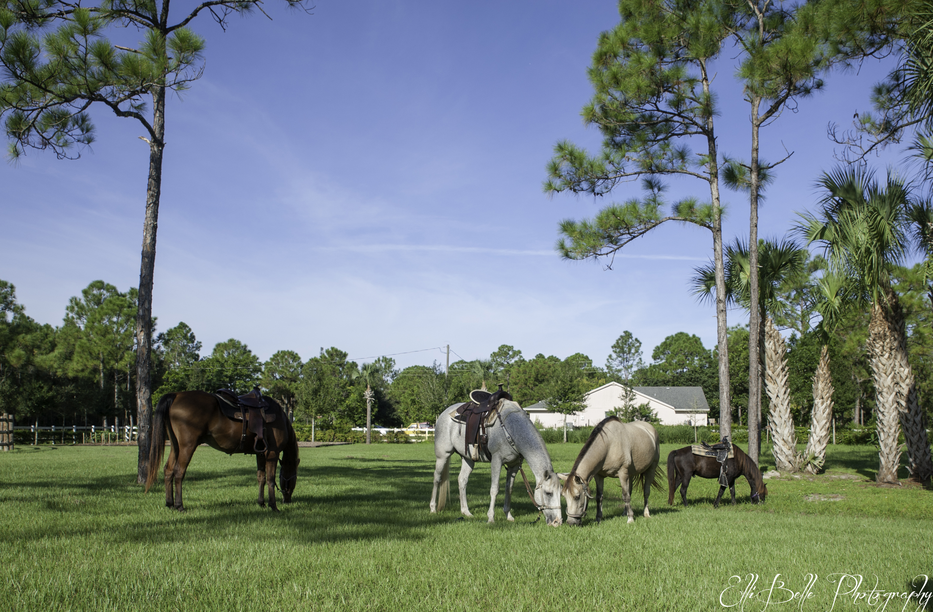 Horses that Help, Ellibelle Photography, Palm Beach County Photographer