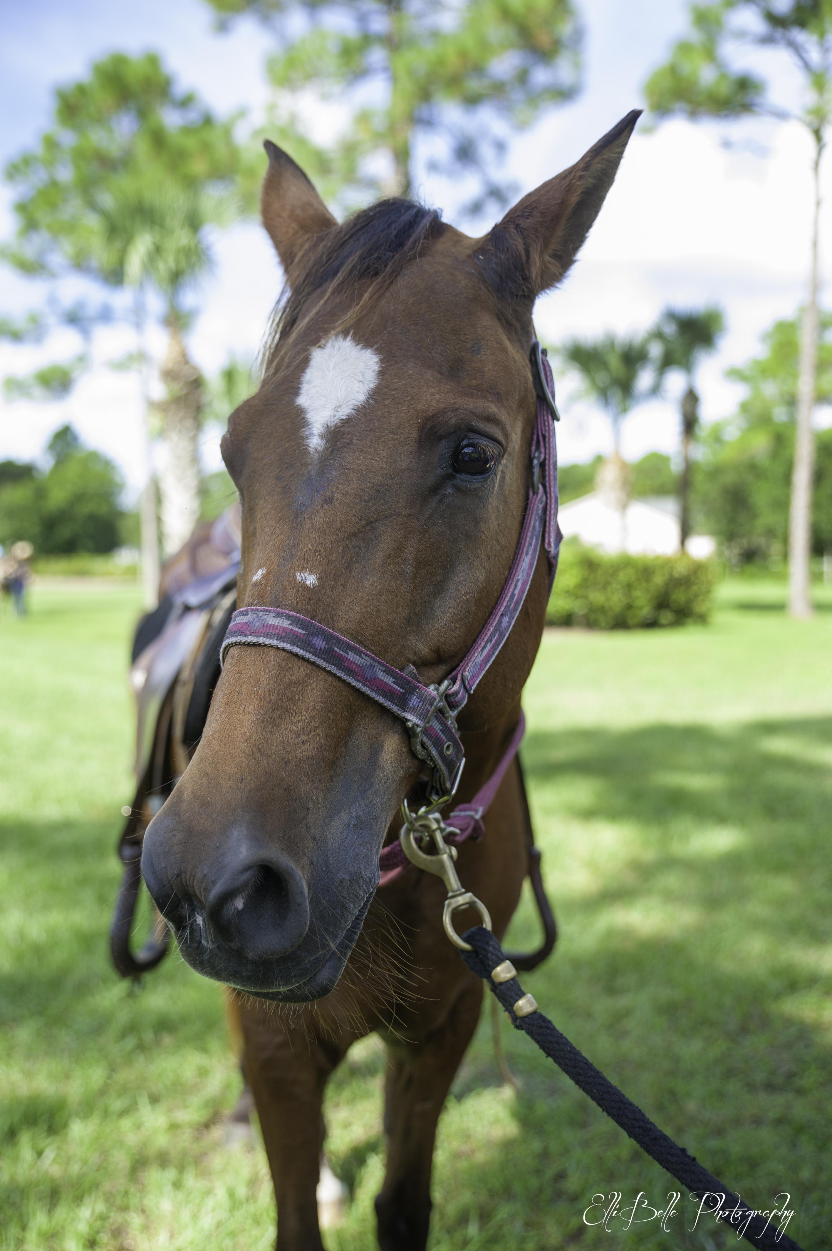 Horses that Help